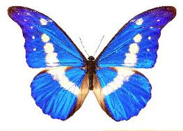 The Butterfly Logo = Transformation